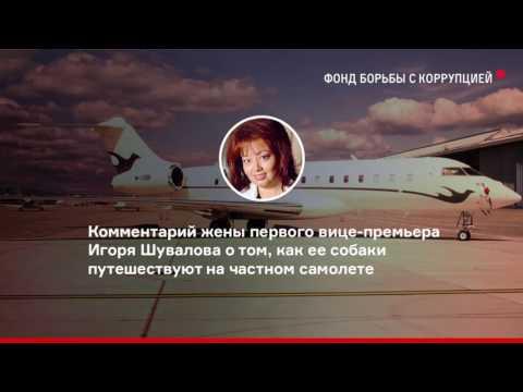соцсети, россия, народ, кризис, животные - 10 лучших комментариев про собак Шувалова, летающих по миру на частном самолете