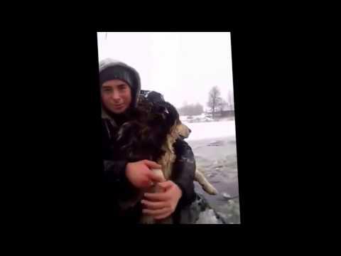 россия, народ, животные, душевное - Это видео со спасением пёсика из озера наверняка разберут на цитаты