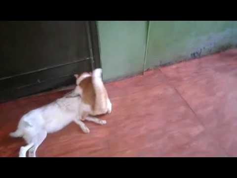 россия, народ, животные - Это видео с охотничьим котом возмутило зрителей и рассмешило автора