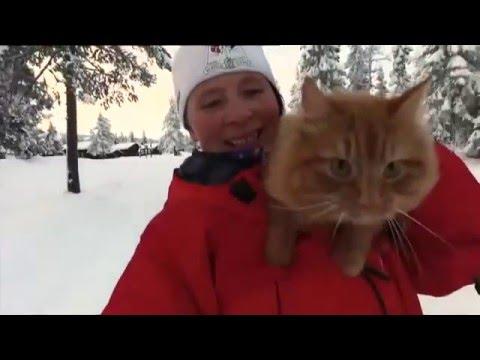 Видео: Ездовой спортивный котик - спорт, необычное, животные