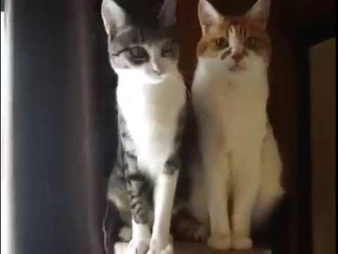 необычное, музыка, животные, душевное - Видео: Котик, осознавший всю иллюзорность этого мира
