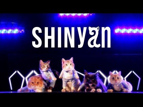 необычное, музыка, красота, интернет, животные - Первый в истории кошачий бойс-бенд понравился котикам