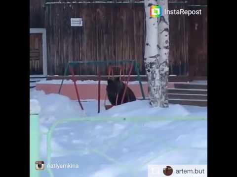 Это Колпашево)) Медведь качается на качельке около Рыбника