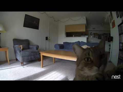 Nest Cam | Mia the curious cat.