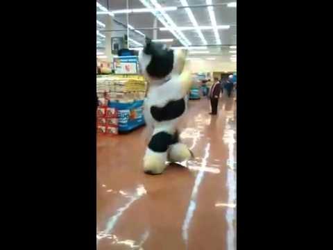 Supermarket cow Milk Shake dance - Tik Tok challenge