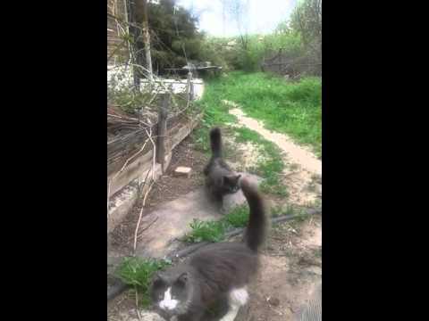 Не поверите!!!Но у кота три хвоста!!!