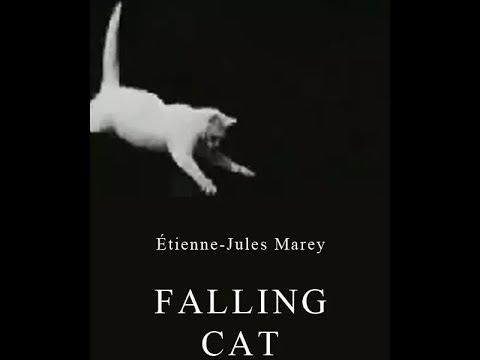 Falling Cat 1894 Падающая кошка Режиссёр Этьен-Жюль Маре