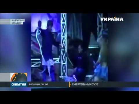 Певица погибла на сцене от укуса кобры - ЧП, музыка, знаменитости, животные