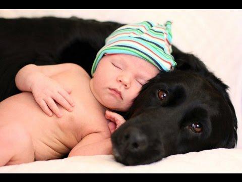 , Видео, доказывающее, что кошки и собаки — самые заботливые опекуны для детей, LIKE-A.RU