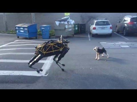 Fido vs Spot —Animal vs Robot