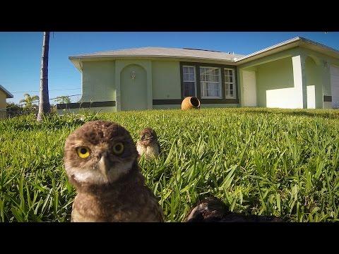 животные - Видео: Человек из дома, совы в пляс