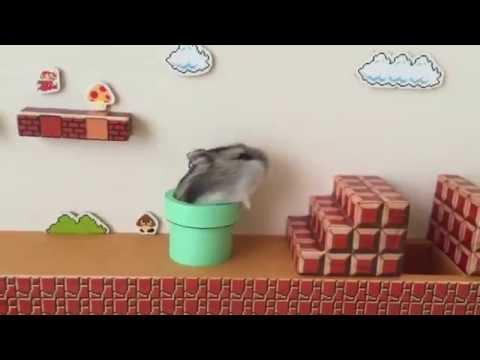 ハムマリオ( HAMUMARIO)Hamster Super Mario Bros.