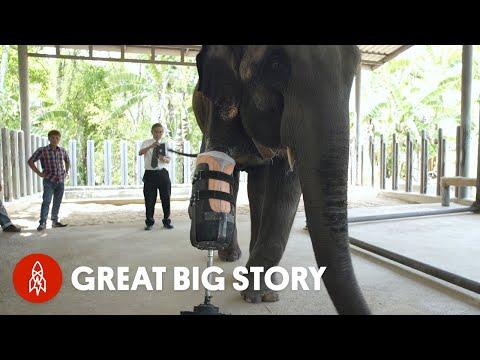 ЧП, необычное, животные - Слону впервые в истории сделали протез ноги