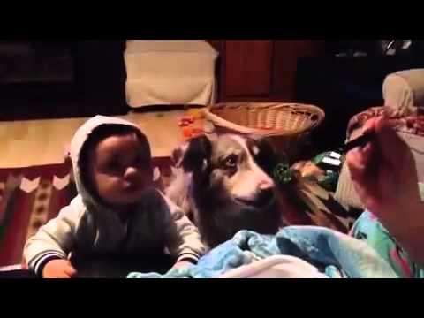 """Собака научилась говорить """"мама"""""""