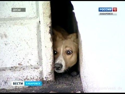 россия, народ, животные, душевное, OMG-WTF - Как люди освободили собаку, три года жившую в щели между зданиями