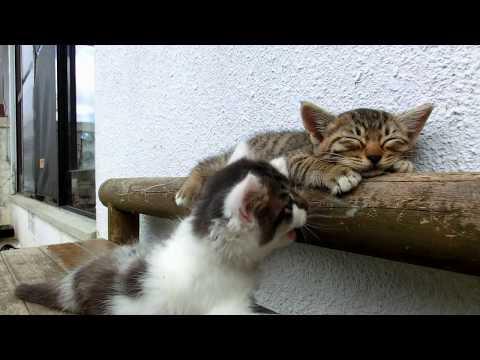 寝たい猫と遊びたい猫