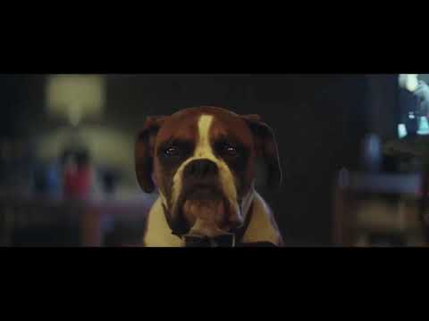 John Lewis Christmas Ad 2016 with Buster The Boxer Dog
