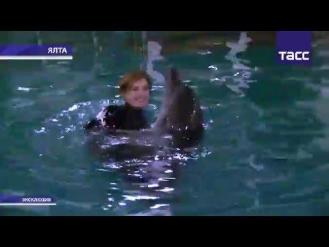 россия, знаменитости, животные, душевное - Поклонская неделю жила в вагончике у дельфинария, лечась от депрессии