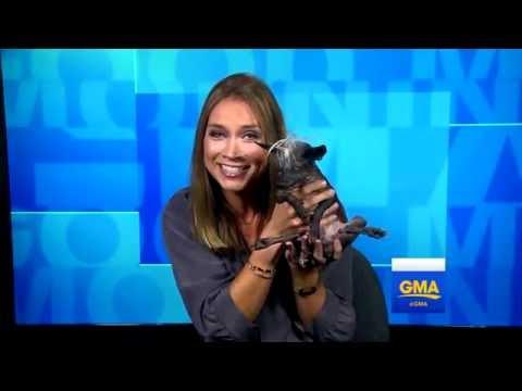 рейтинги, красота, картинки, животные - Как выглядит самая уродливая собака в мире