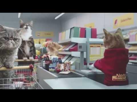 Котики исполнили все роли в рекламе супермаркета - телевидение, необычное, животные