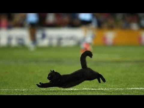 , Прекрасный чёрный котик выскочил на поле во время игры в регби, LIKE-A.RU