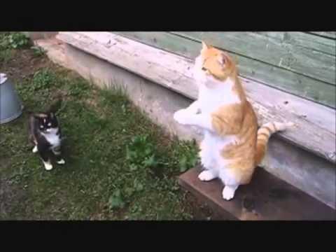 Русские коты )))