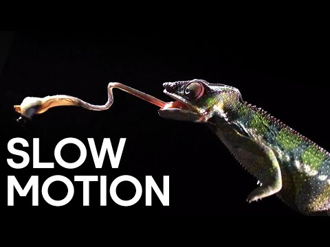 Deadly Animal Attacks in Slow Motion | Slow Motion | Earth Unplugged