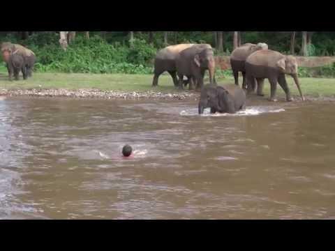 Elephant Come To Rescue People - ElephantNews
