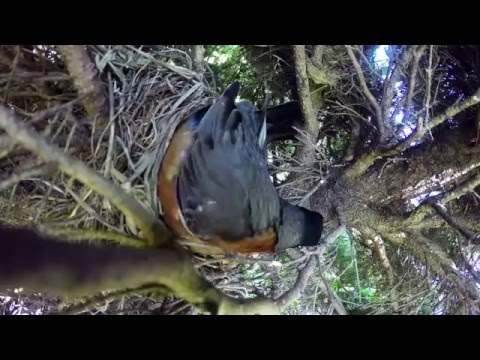 Incredible time lapse of birds nest.