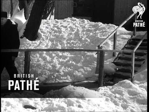россия, ностальгия, животные - Вирусный ролик 1959 года: Трогательная история дружбы лебедя Борьки и смотрителя Павла
