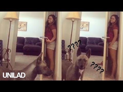 Dog Plays Hide & Seek With His Owner