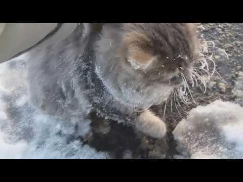 Уральская семья спасла котика, вмёрзшего в лёд, и прославилась на весь мир -