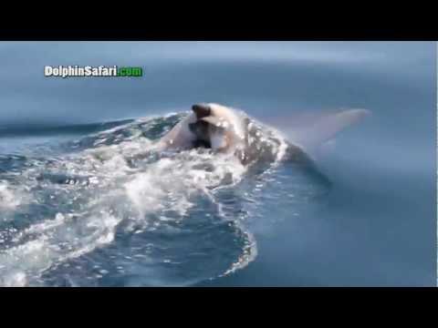 Киты и дельфины скорбят по умершим - прямо как мы - необычное, животные, душевное