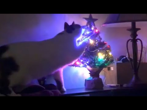 Cats and Christmas Trees 🎄 [Funny Pets]