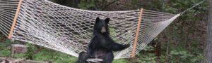 37 медведей, пытающихся вести себя как люди, всё равно оставаясь обаятельными и забавными