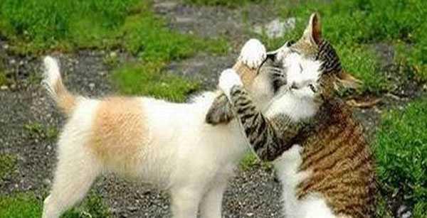 Исследование выявило топ-10 золотых правил настоящей дружбы. Вот что значит настоящий верный друг!