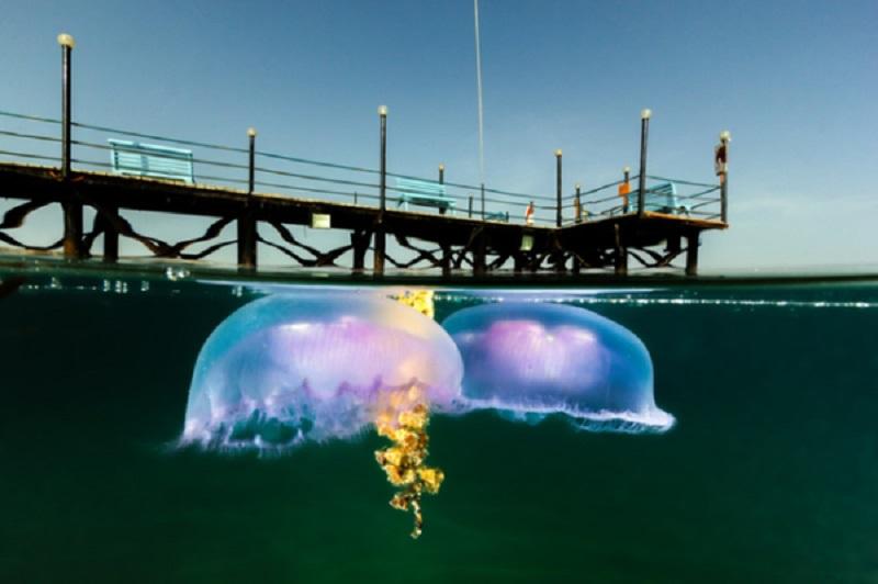 Думаете, знаете, что ждет вас под водой? 18 из двадцати этих фотографий показывают, что нет - необычное, картинки