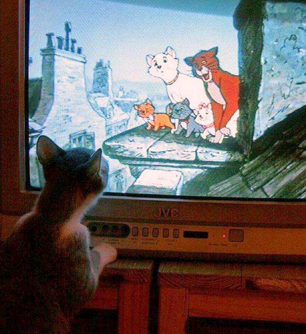 cats_and_tv-_025