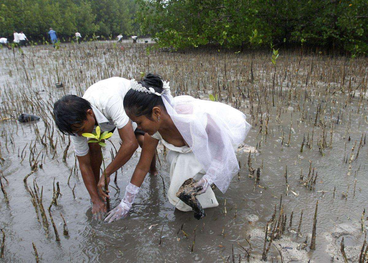 joey-bayo-and-his-wife-lea-plant-a-mangrove-tree-after-their-wedding-in-san-jose-town-puerto-princesa-palawan-city-western-philippines