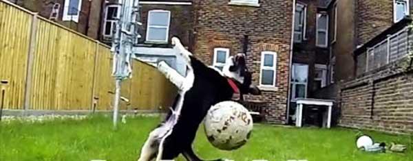"""Собаки уже не те: 27 четвероногих друзей человека, разучившихся команде """"Апорт!"""" (принеси) - животные, душевное"""