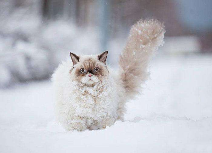 20-pictures-of-animals-playing-in-the-snow-for-the-first-time-1__700