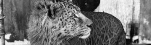 14 невероятных животных-гибридов, в реальность которых трудно поверить