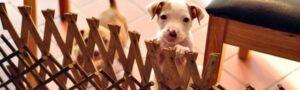 21 доказательство того, что у щенков порой бывает совершенно собачья жизнь