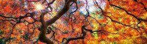 11 красивейших деревьев