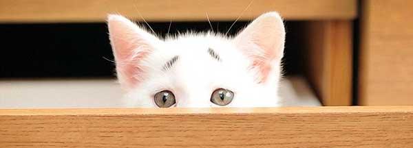 Новый рекорд мимишности: Очаровательный обеспокоенно - удивленный котенок