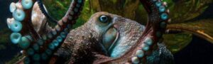 Большой побег: Осьминог умудрился сбежать из аквариума прямо в океан