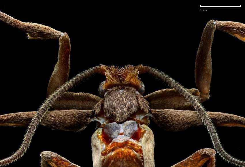 , На этих уникальных фото можно разглядеть насекомых до мельчайших деталей, LIKE-A.RU