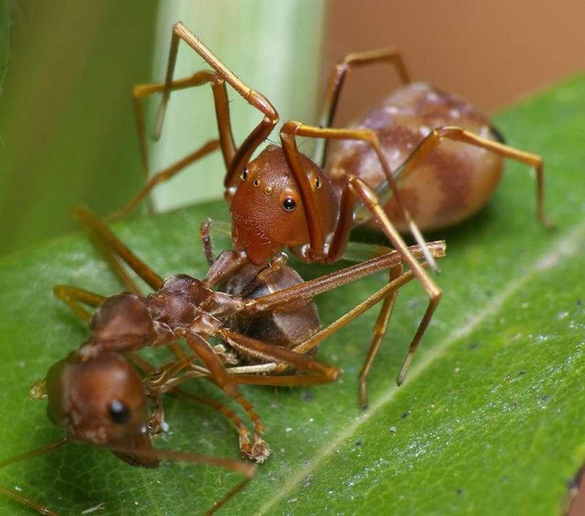 необычное, картинки, знания, животные - 10 удивительных живых существ, которые маскируются под насекомых